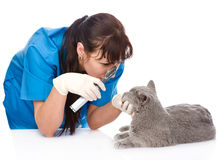Female professional vet doctor examining pet cat eyes. isolated Stock Images