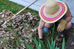 Female pulling weeds. Royalty Free Stock Image
