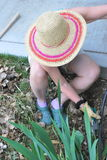 Female pulling weeds. Royalty Free Stock Photo