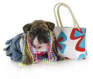 Female puppy Royalty Free Stock Photo