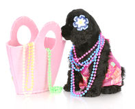 Female puppy Royalty Free Stock Photos