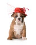 Female puppy Stock Photos