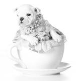 Female puppy Stock Image