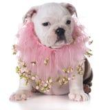 Female puppy Stock Photo