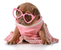 Female puppy stock photography