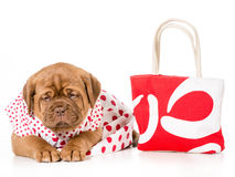 Female puppy Royalty Free Stock Photography