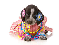 Female puppy Royalty Free Stock Photos