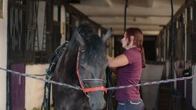 Female is putting harness of lightweight cart on horse