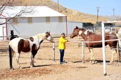 Female rancher. Stock Image