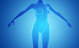 Female x-ray Body Royalty Free Stock Images