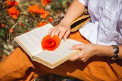 Red poppy on open book pages. Woman hols a fred flower on the open book while reading. royalty free stock photo