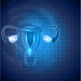 Female reproductive system background vector illustration