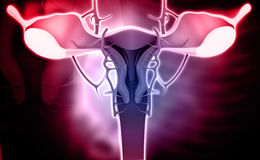 Female reproductive system Royalty Free Stock Photo