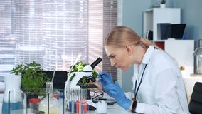 Female research scientist dropping sample on microscope slide and examining it. Working in modern bright chemistry lab stock footage