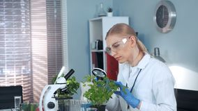 Female research scientist looking on plant under magnifying glass. She is in safety glasses working in bright lab stock video footage