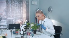 Female research scientist in protective glasses examining plant leaves with tweezers. There are different instruments and lab mice on her table stock video