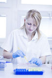 Female researcher doing research in a lab Royalty Free Stock Photography