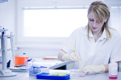 Female researcher doing research in a lab Royalty Free Stock Images