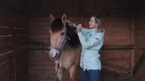 A female rider combs the mane of a horse in the barn stock video footage