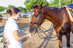 Female rider feeds her horse Royalty Free Stock Images