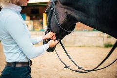 Female rider keeps the horse for a reason Royalty Free Stock Photo