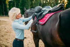 Female rider preparing a horse saddle,. Horseback riding. Equestrian sport, young woman and beautiful stallion, farm animal Royalty Free Stock Image