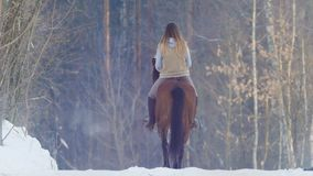 Female rider riding black horse through the snow, rear view royalty free stock images