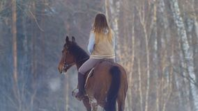 Female rider riding black horse through the snow, rear view stock photography