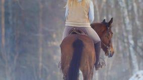 Female rider riding black horse through the snow, rear view. Telephoto shot stock photos