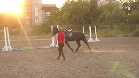 Woman hold horse on leash while running in circle. Female rider trains a horse at a racetrack holding her by the reins. Slow motion. Woman hold horse on leash stock footage