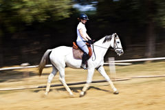 Female rider trains the horse Royalty Free Stock Image