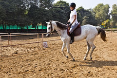 Female rider trains the horse. In the riding course Royalty Free Stock Image