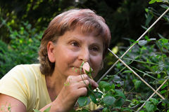 Female with a rose. Retiree smmelling on a rose in her garden Stock Image