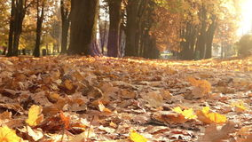 Female runner jogging in park in sunny autumn park. 
