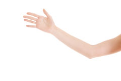 Female's hand stretched out. Royalty Free Stock Image