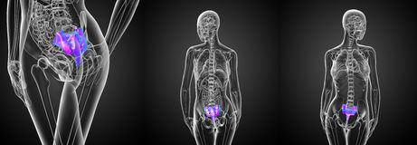 Female sacrum bone. 3d rendering medical illustration of the female sacrum bone Royalty Free Stock Photo