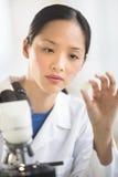 Female Scientist Analyzing Sample In Laboratory. Mid adult female scientist analyzing sample with microscope in laboratory Stock Photo