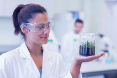 Female scientist analyzing a young plant at lab Stock Photography