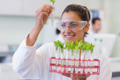 Female scientist analyzing young plants at lab Royalty Free Stock Photos