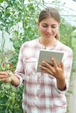 Female Scientist With Digital Tablet In Greenhouse Researching T. Female Scientist Using Digital Tablet In Greenhouse To Researching Tomato Crop stock photography