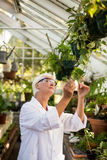 Female scientist examining plant leaves Royalty Free Stock Photo