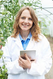 Female Scientist In Greenhouse Researching Tomato Crop Stock Photography