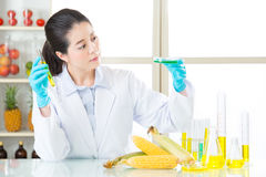 Female scientist looking for gmo corn dna for safety Royalty Free Stock Photography
