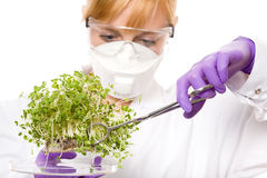 Female scientist looking at plant sample Royalty Free Stock Photo