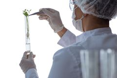 Female scientist researcher conducting an experiment in a labora Stock Image