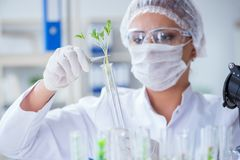Female scientist researcher conducting an experiment in a labora Royalty Free Stock Photography