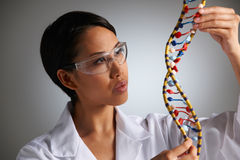 Female Scientist Studying Molecular Model In Shape Of Helix Stock Photography