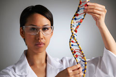 Female Scientist Studying Molecular Model In Shape Of Helix Royalty Free Stock Image
