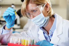 Female Scientist Studying Test Tube In Laboratory. Experimenting Royalty Free Stock Images