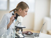 Female Scientist Using Laptop At Desk In Laboratory. Young Caucasian female scientist using laptop while sitting with microscope at desk in laboratory Stock Images